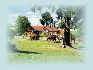 Pferde vor der Ranch